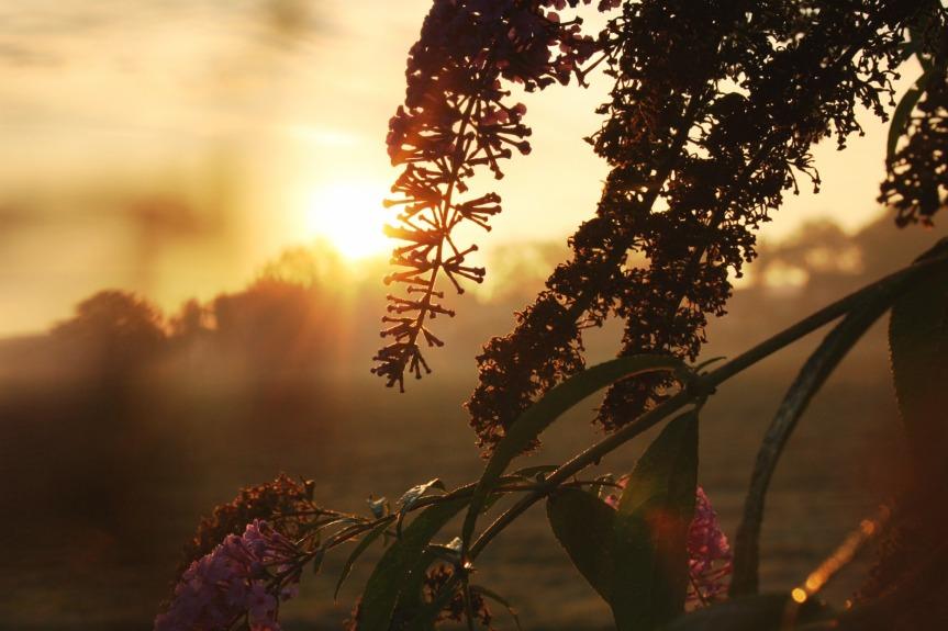 morning_9613702000_o